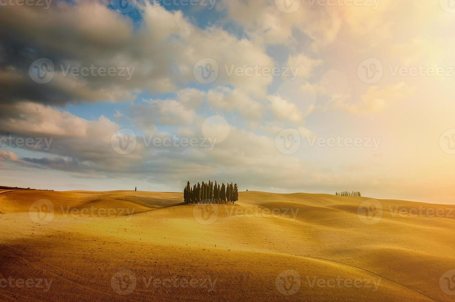 Autumn colors on the fields with Cypresses photo