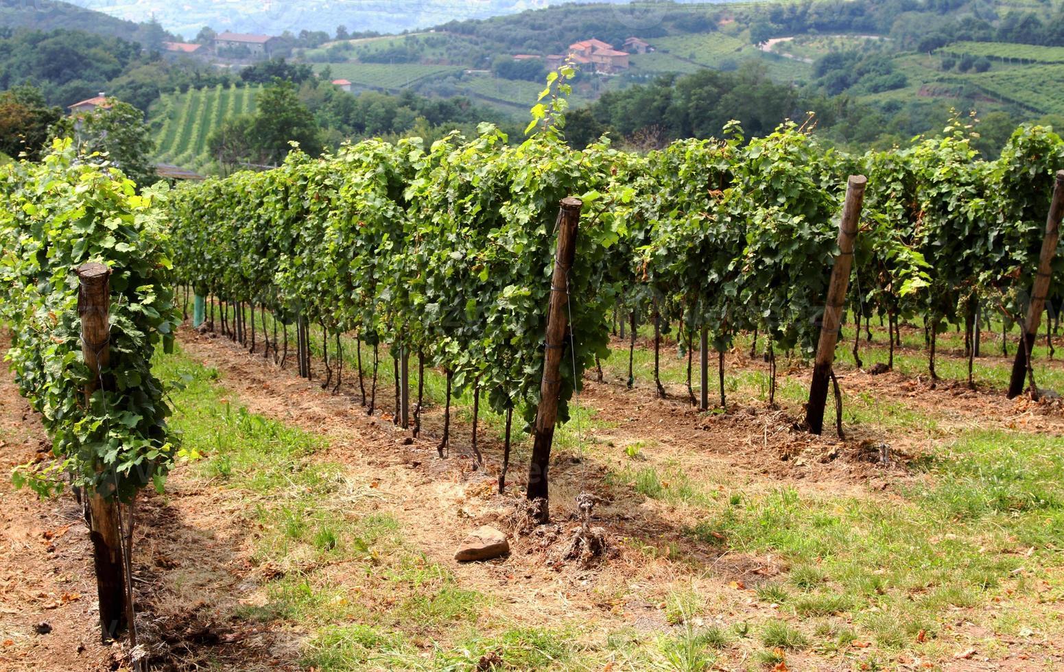 hermosos viñedos en el campo de la toscana foto