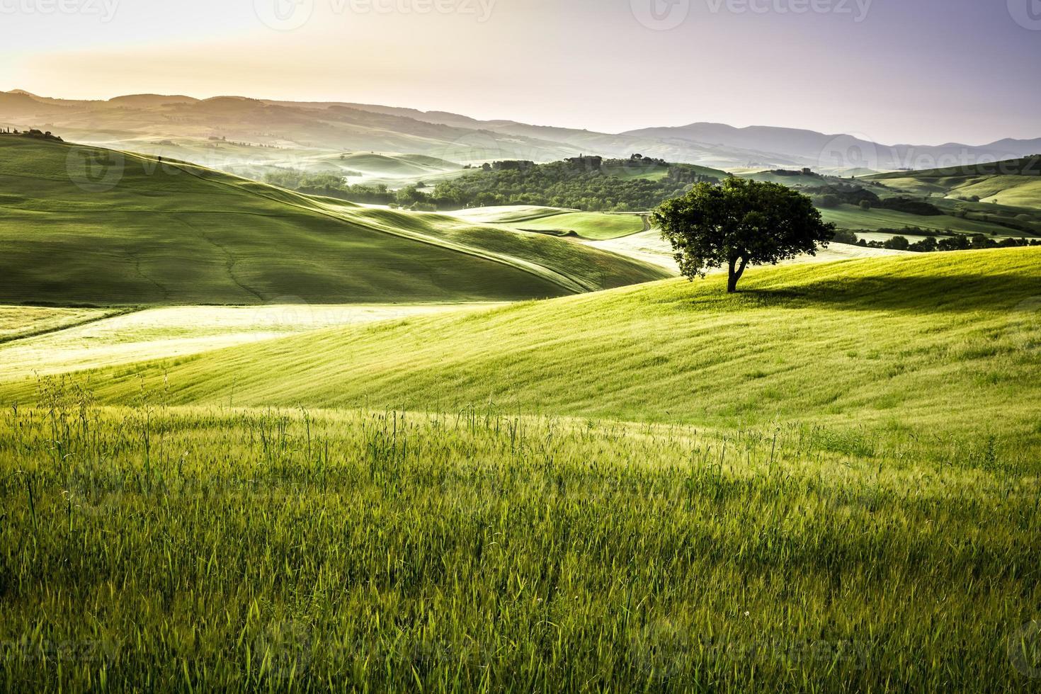 nascer do sol sobre os campos verdes da Toscana foto