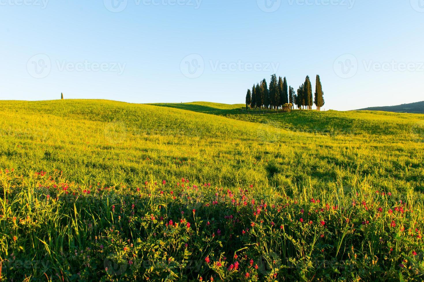 tuscany landscape near Pienza, Val d'Orcia Italy photo