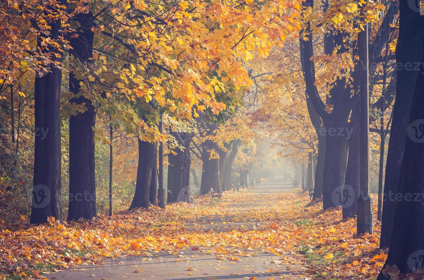 beco de árvores coloridas no parque outono foto