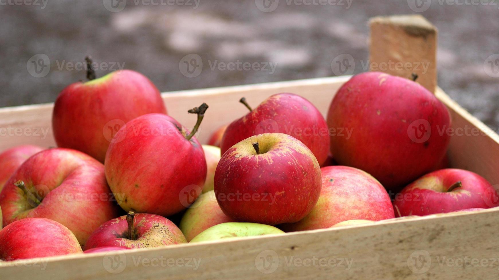 maçãs vermelhas na caixa foto
