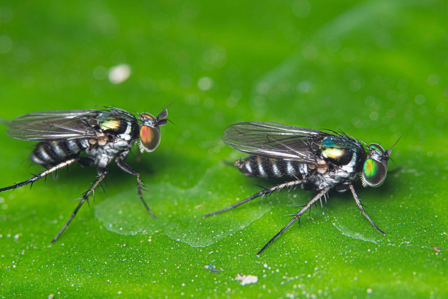 moscas en hoja verde foto