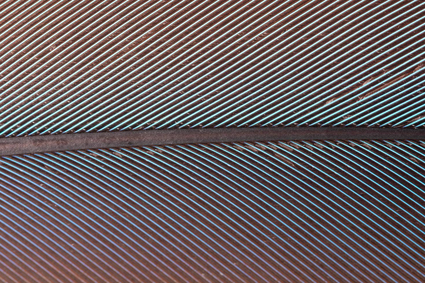 patrón de plumas de colores foto