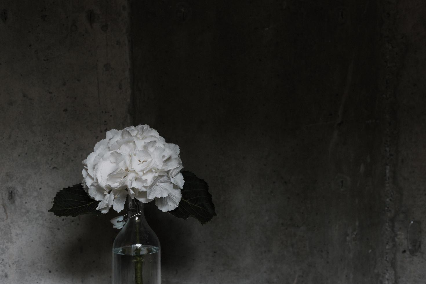 Foto de primer plano de arreglo floral de pétalos blancos