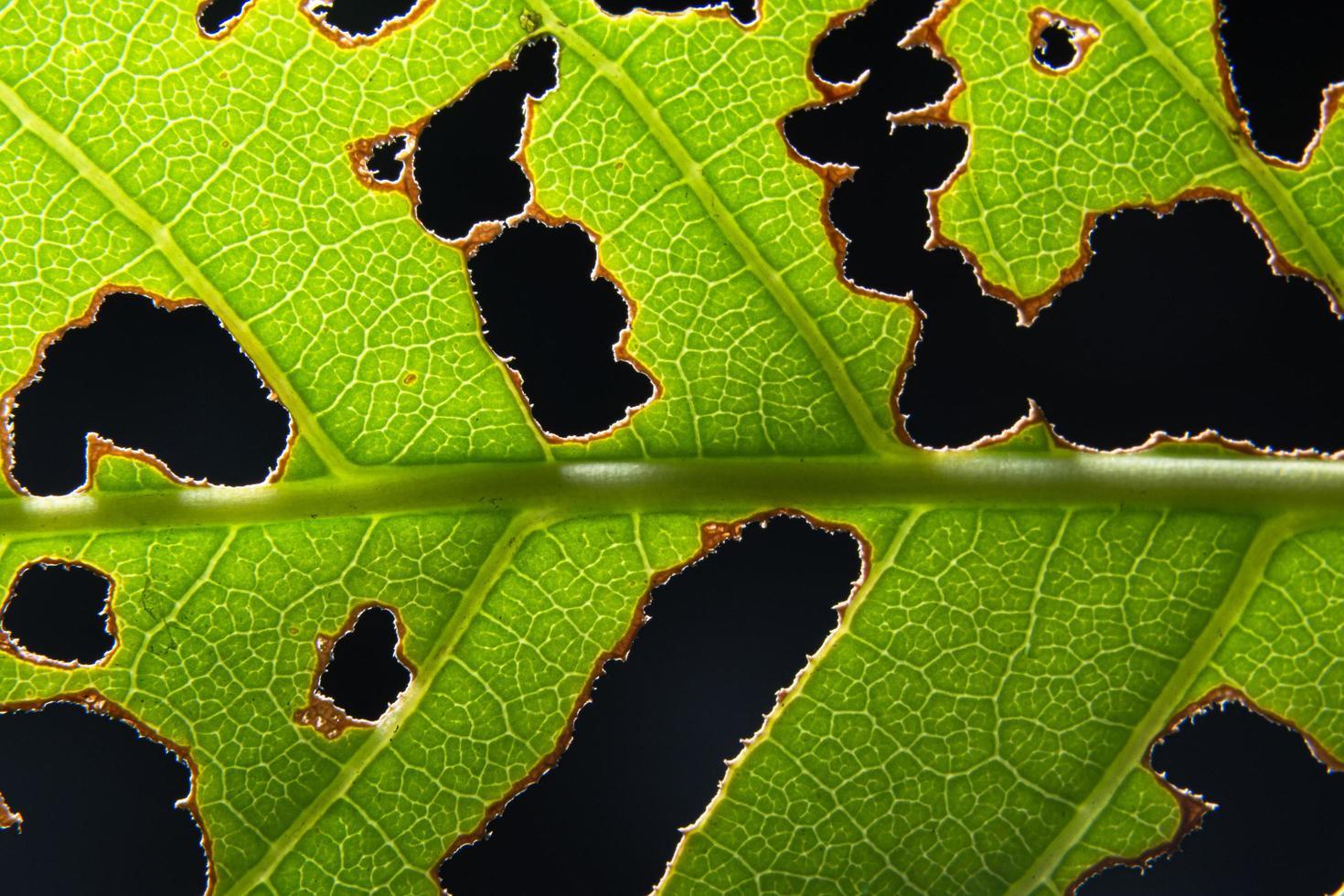 hoja verde sobre fondo negro foto