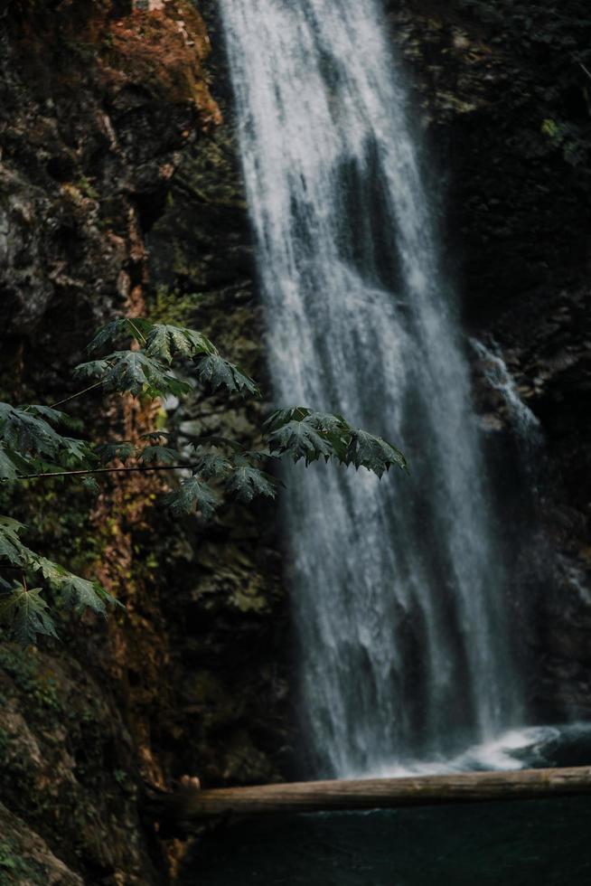 cascadas en el bosque foto