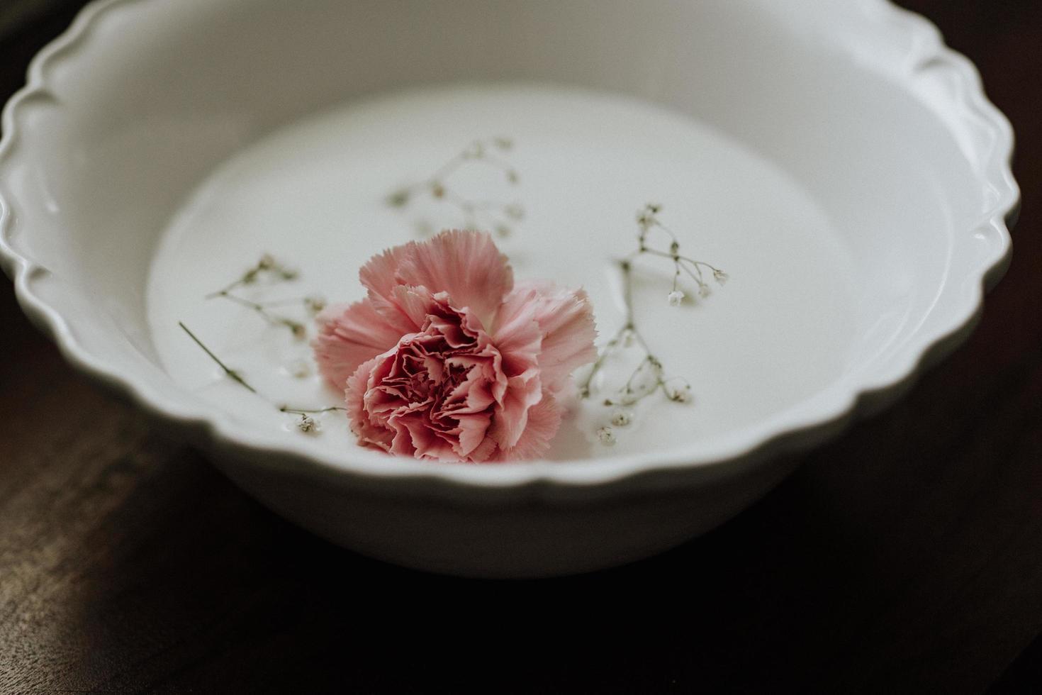 Pink rose in white ceramic bowl photo