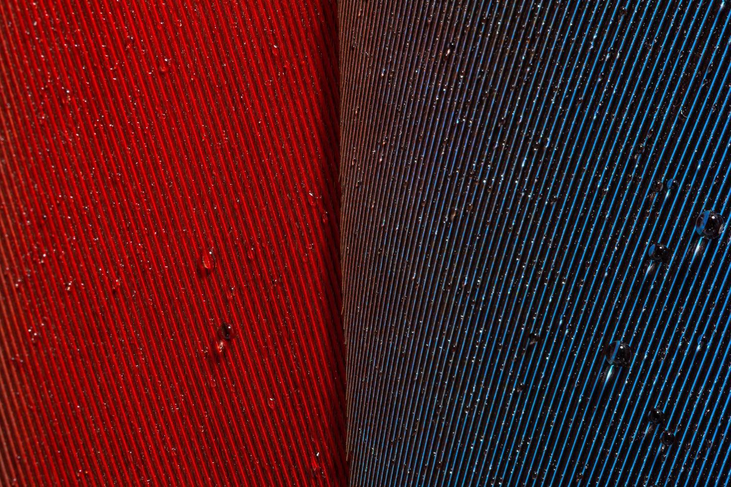 gotas de agua en una pluma foto