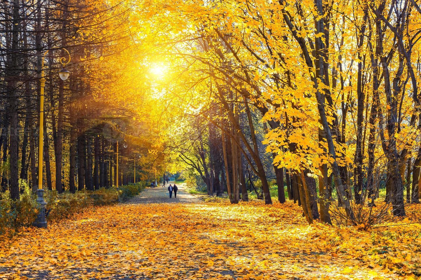 Sunny autumn park photo