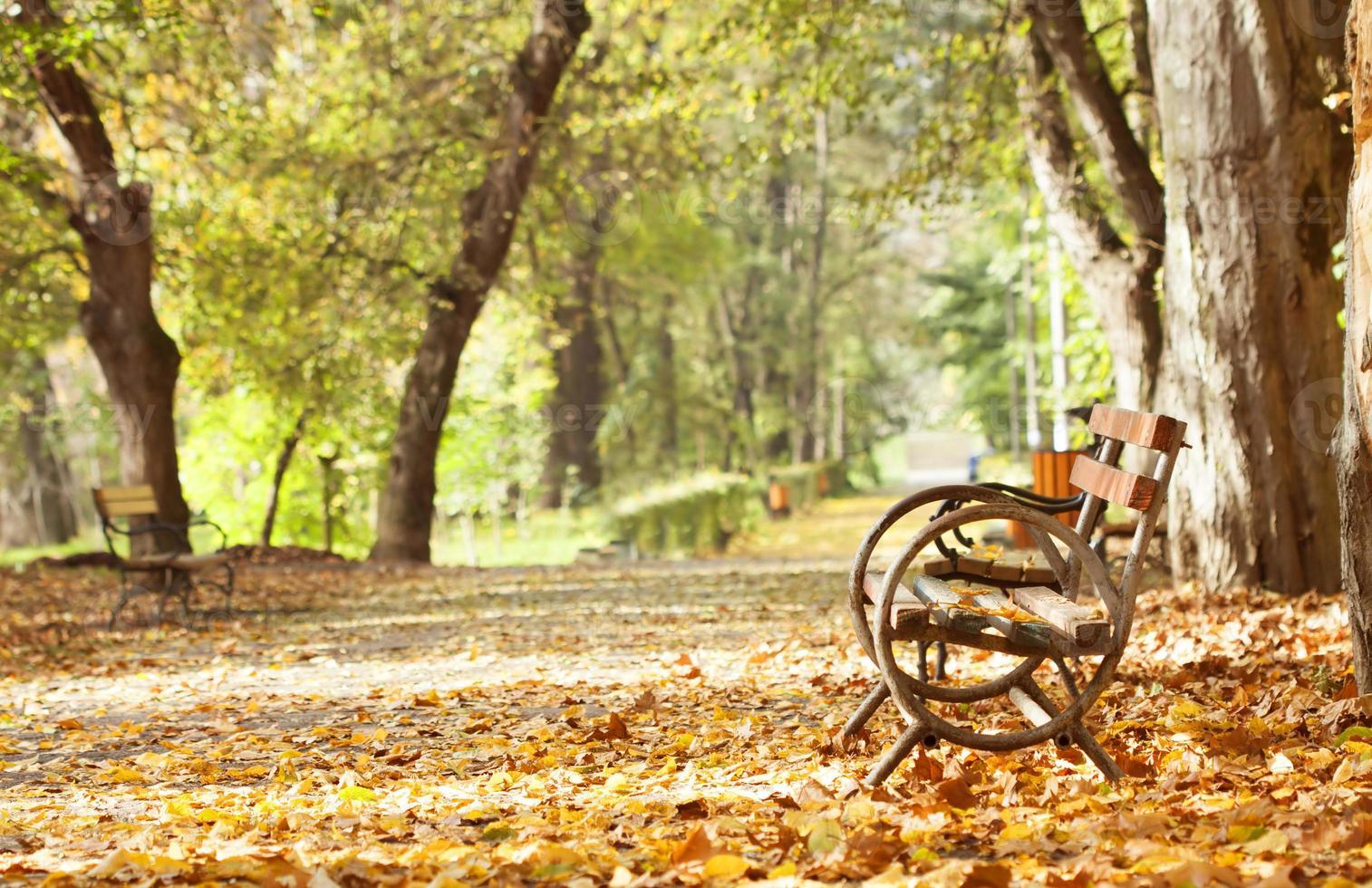 Wooden bench in autumn park photo