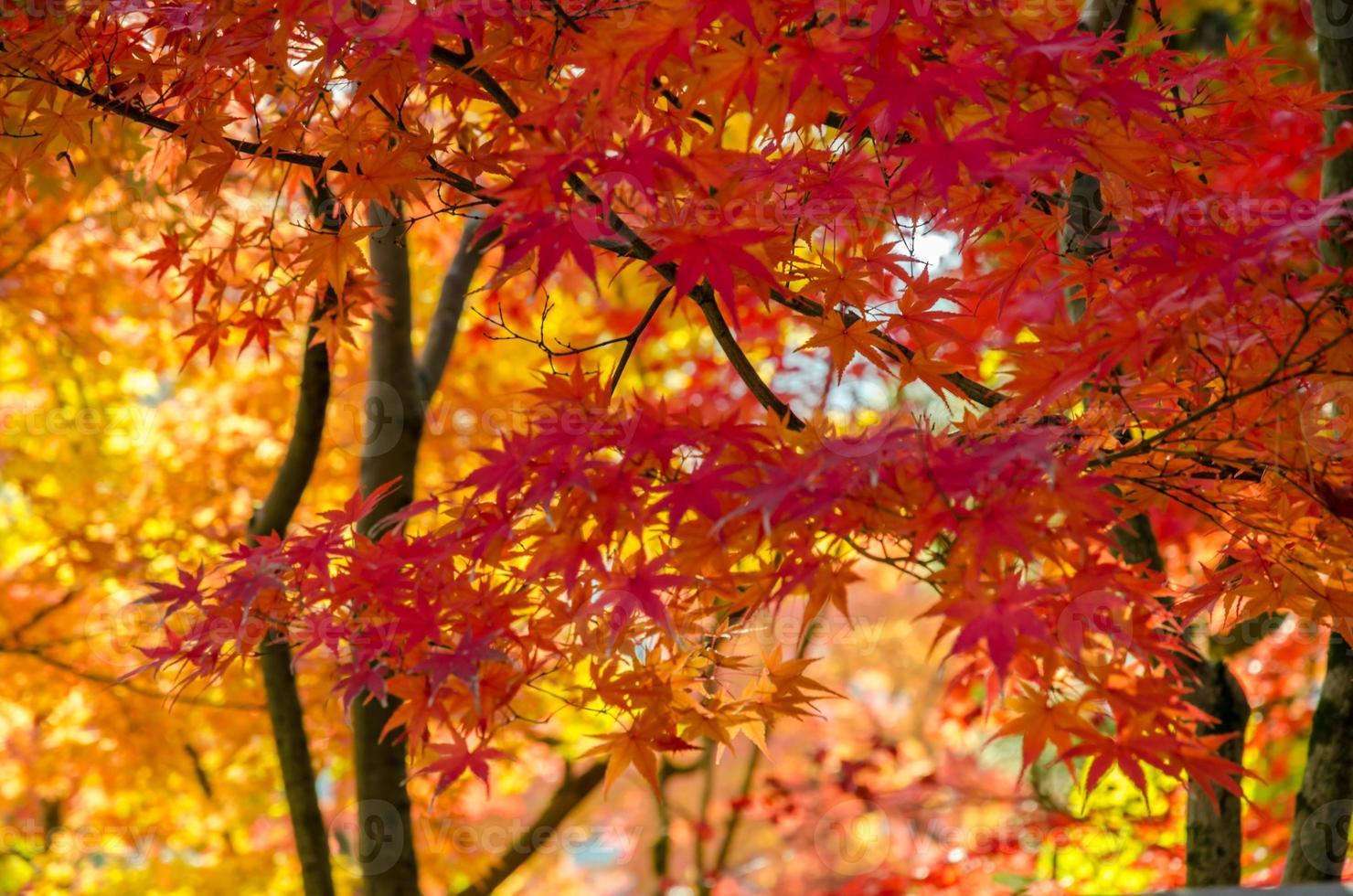 Fondo colorido de otoño, rojo, naranja y pan de oro. foto