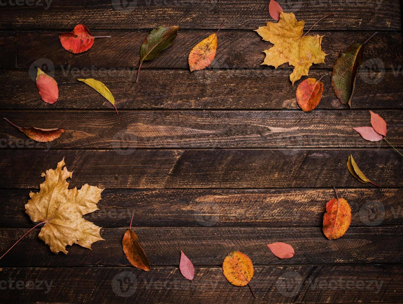 Colorful autumn leaves on a dark old wood background. photo
