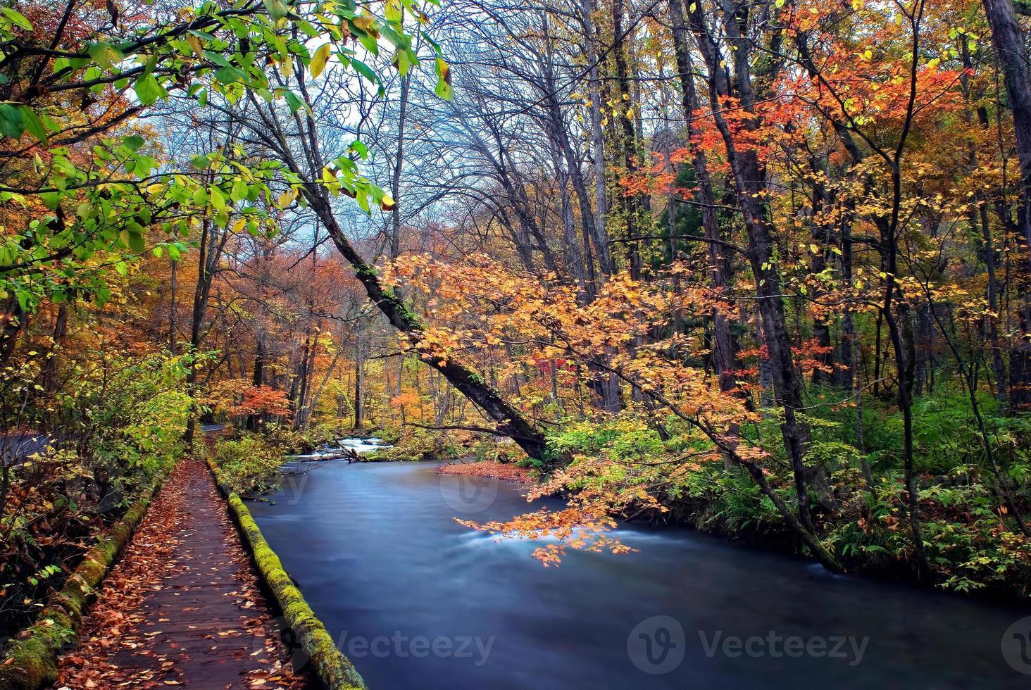 colores otoñales del río oirase foto