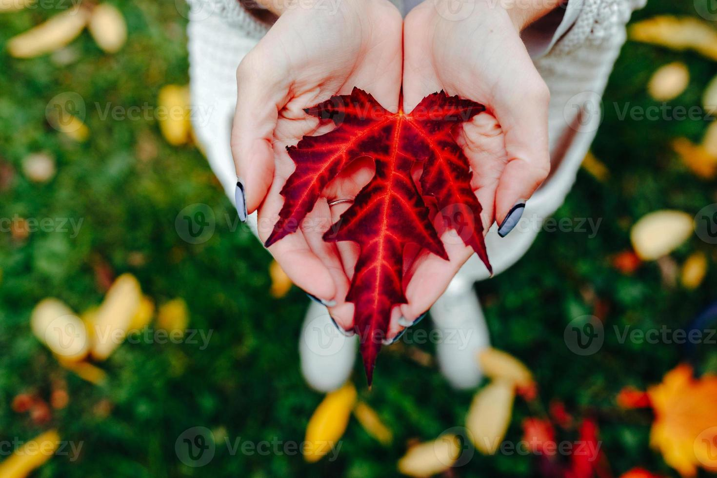 Autumn leaves in girl hands photo