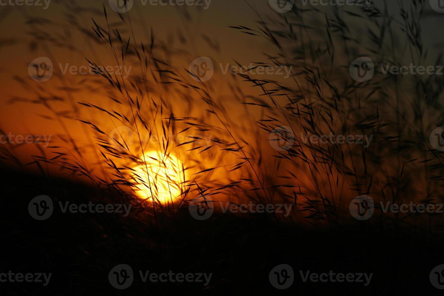 Free State Sunset behind grass photo