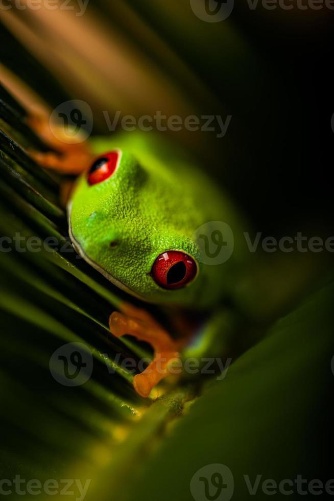 tema colorido natural y fresco con rana exótica foto