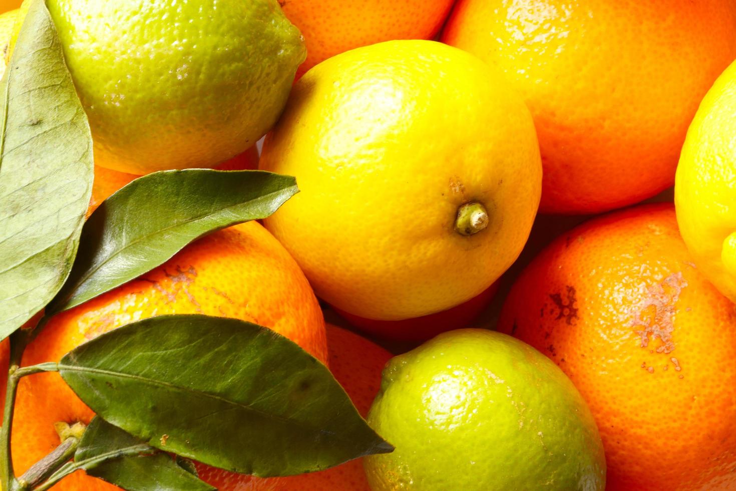 Various citrus fruits photo