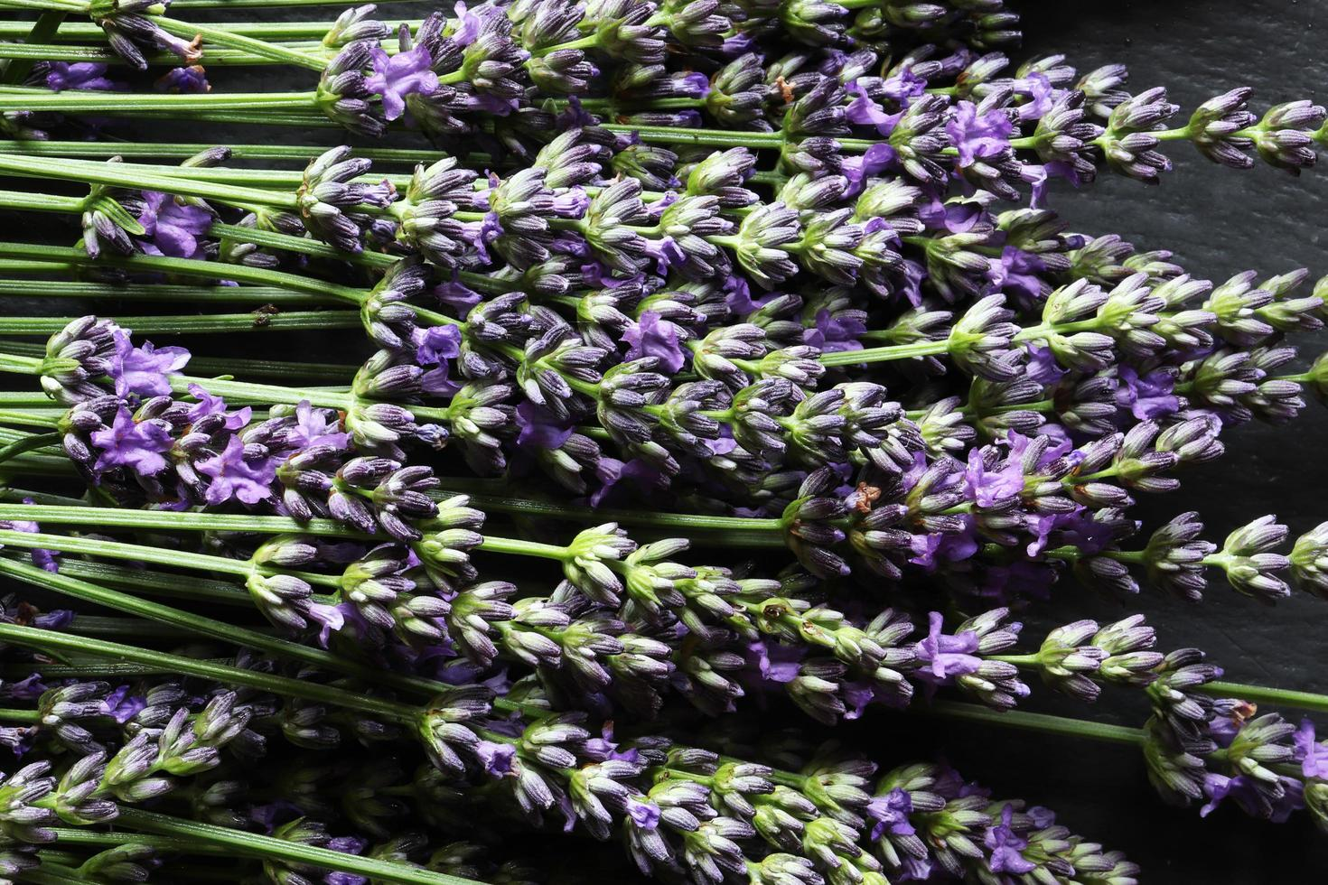 Bunch of lavender photo