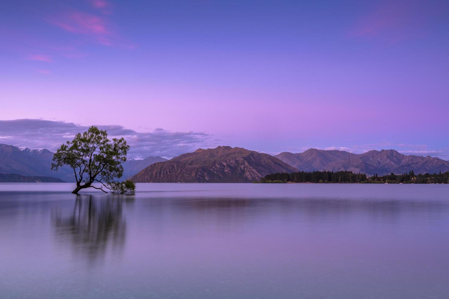 Tree in body of water near mountains photo