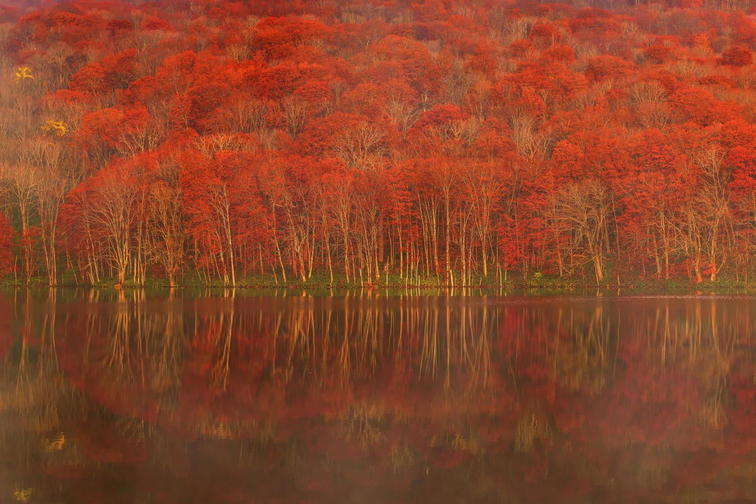 Red and green trees beside body of water photo