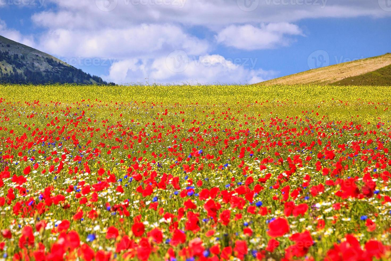 Flowery plain photo
