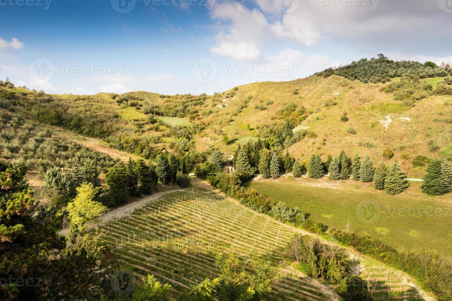 Cultivated hills photo