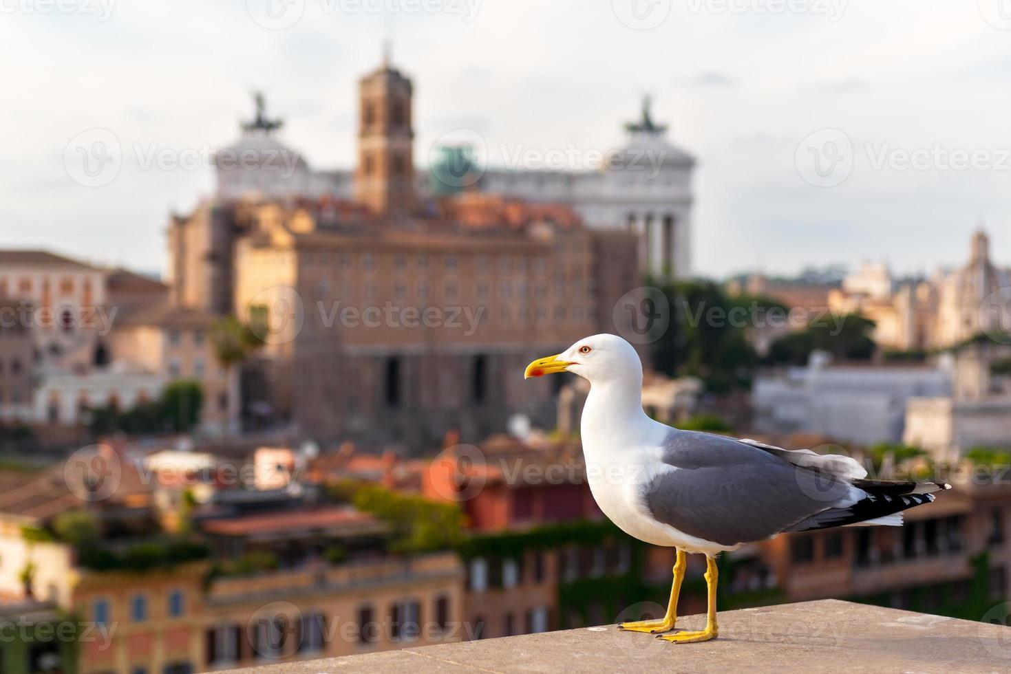 Seagull in the Roman Forum in Rome photo