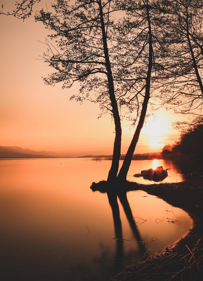 Silhouette of trees on water during golden hour photo