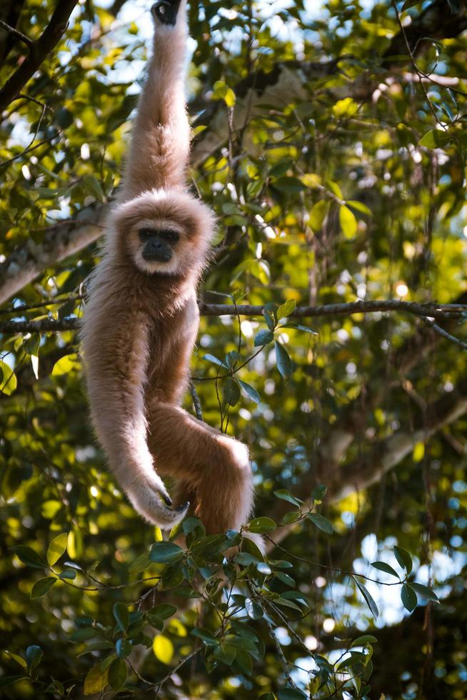 Monkey hanging from a tree photo