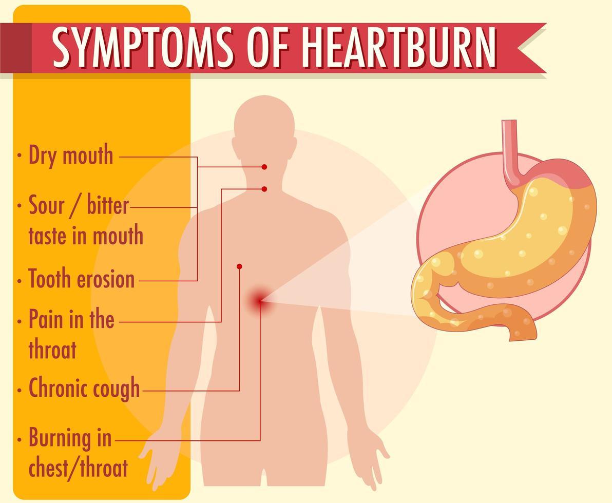 Symptoms of heartburn information infographic vector