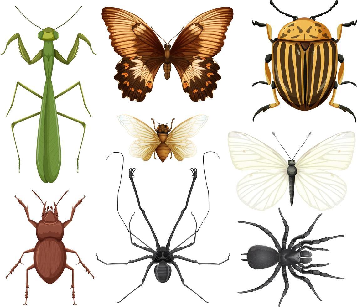 colección de diferentes insectos aislados vector