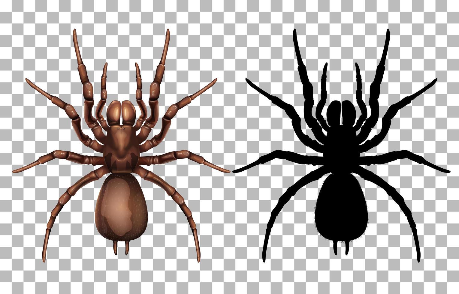 araña y silueta vector