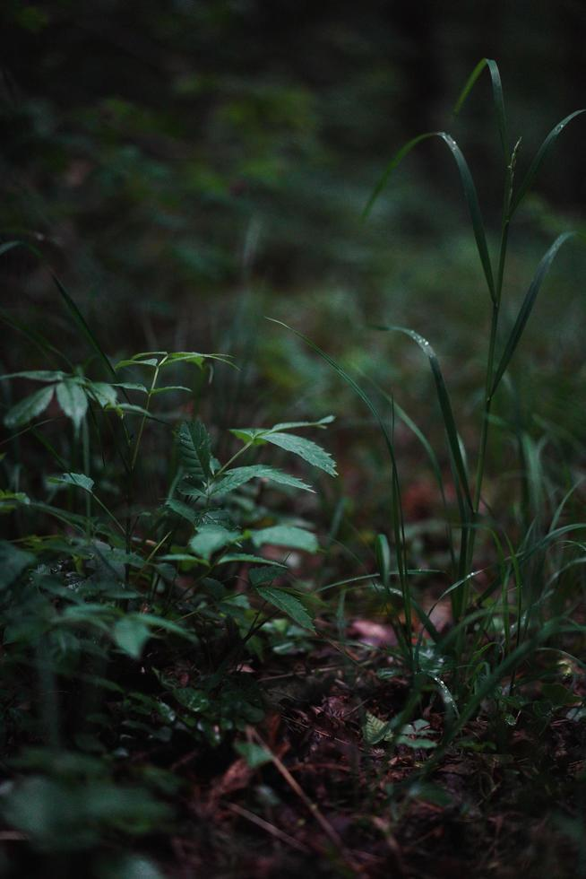 Grass field during daytime photo