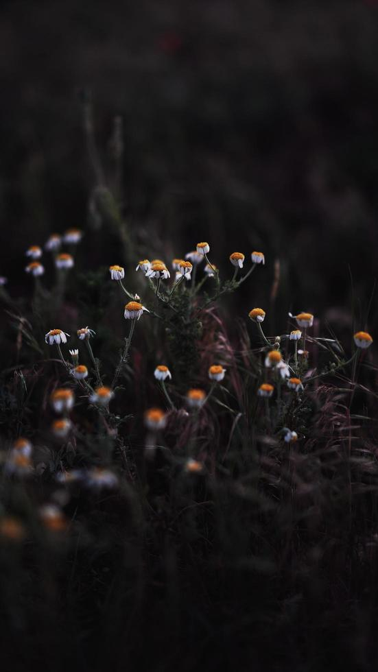 Wild flowers growing photo