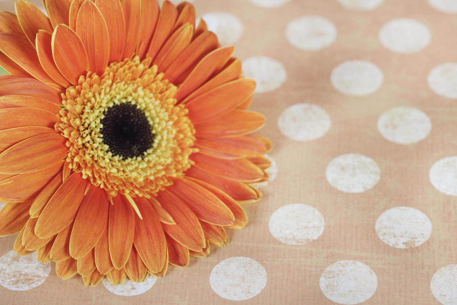flor de naranja sobre mantel de lunares foto