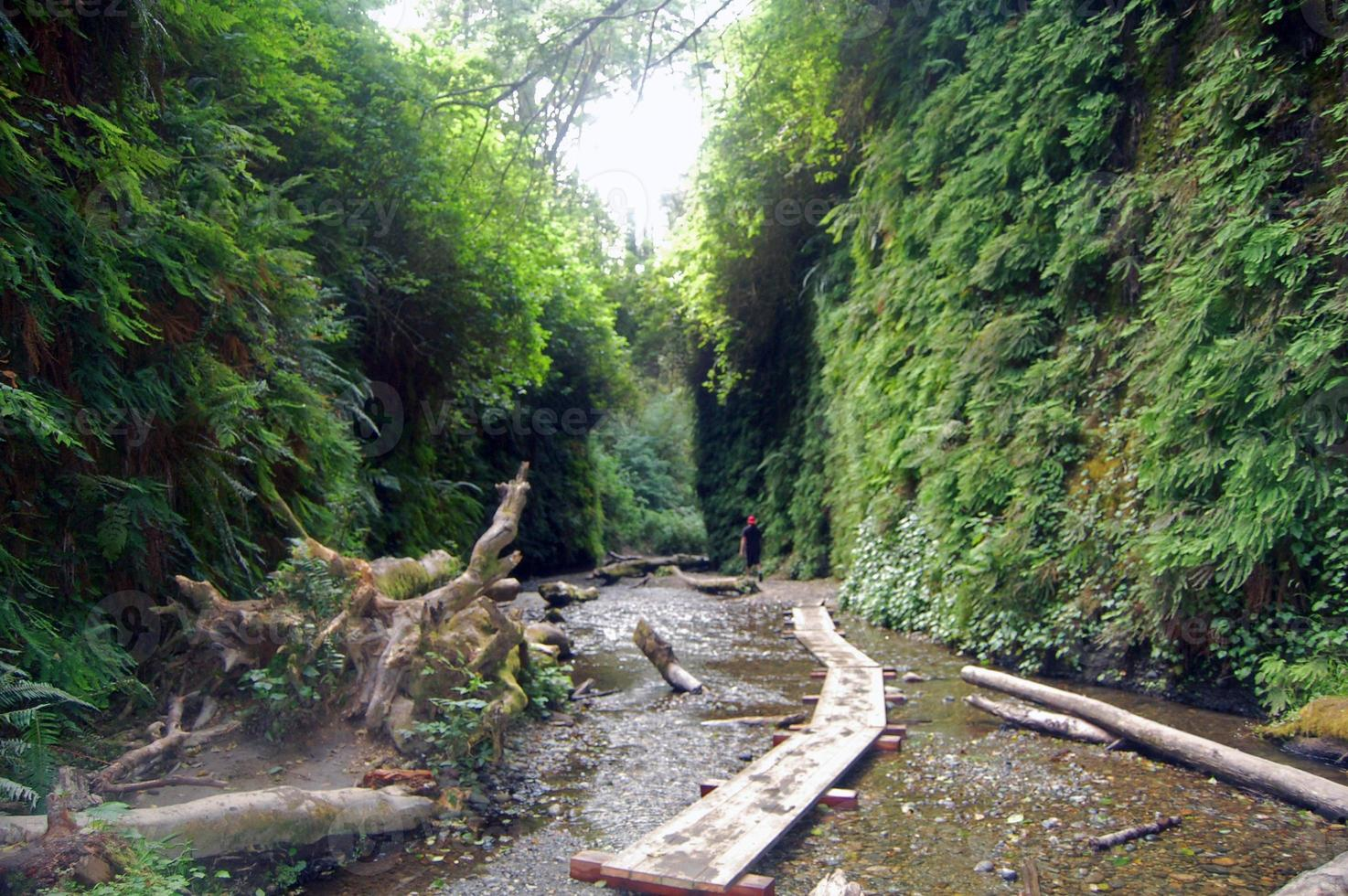 walk through fern canyon photo