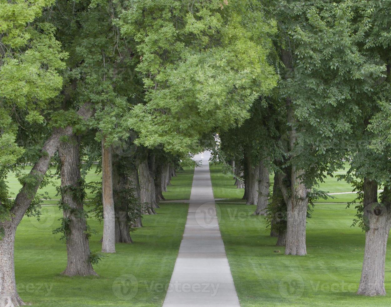 Green Tunnel photo