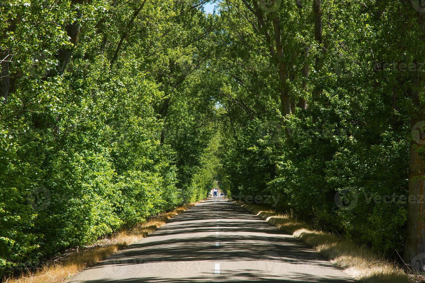 túnel do bosque na rodovia - tunel de arboleda en carretera foto