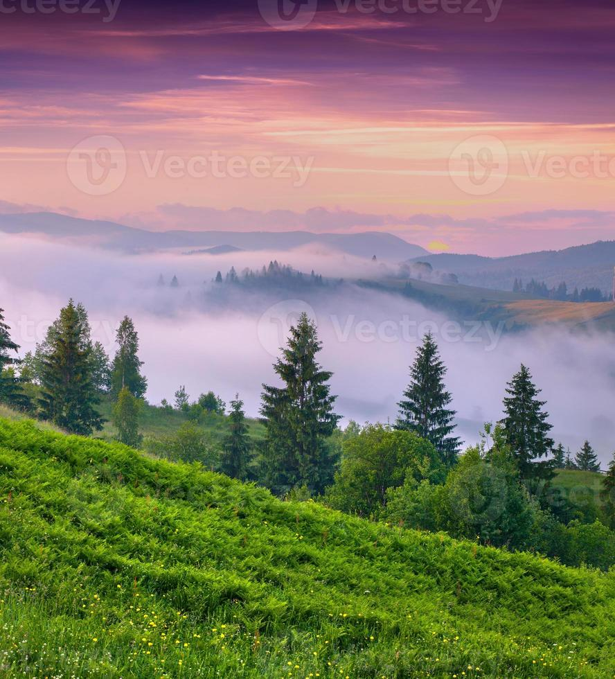Foggy summer morning in the mountains. photo