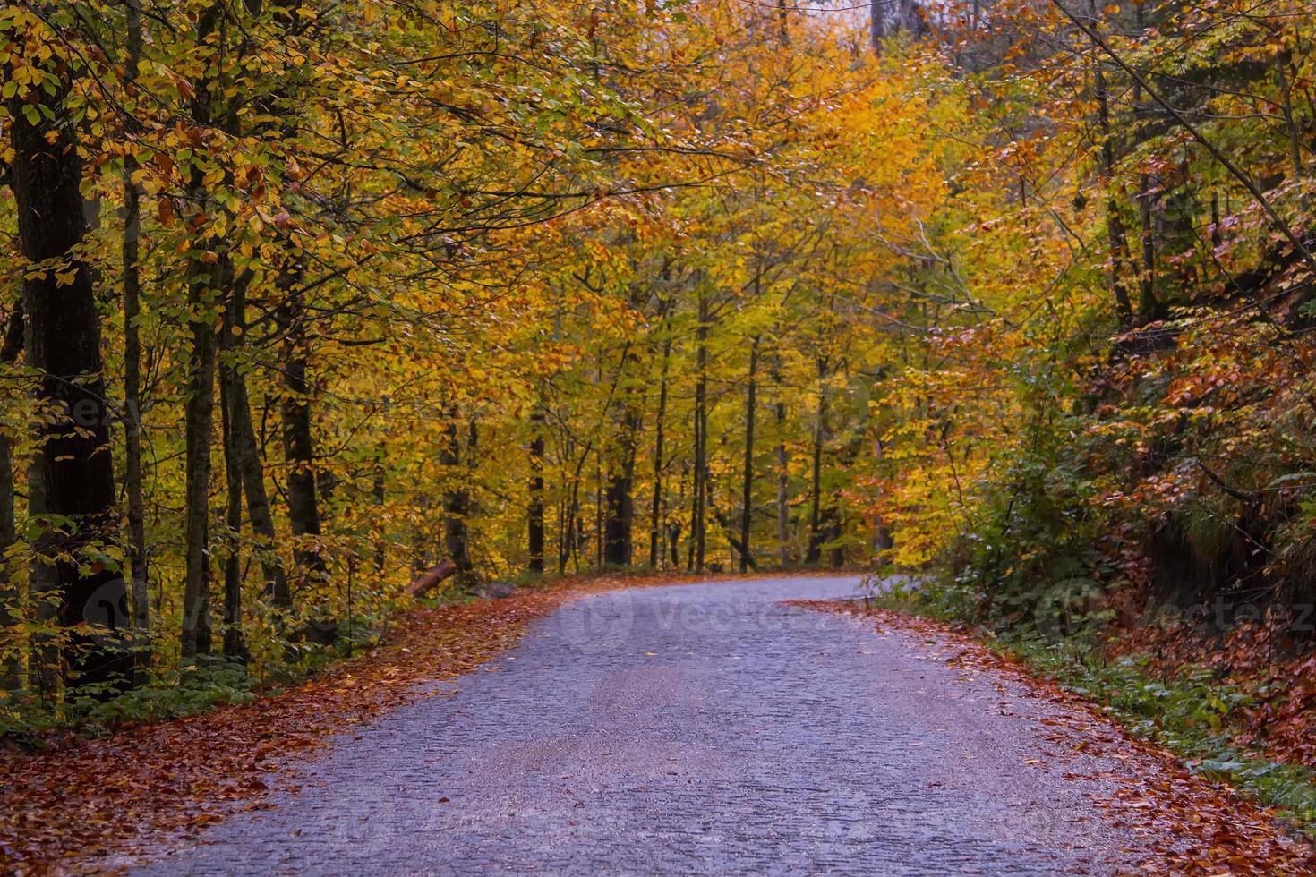 la carretera foto