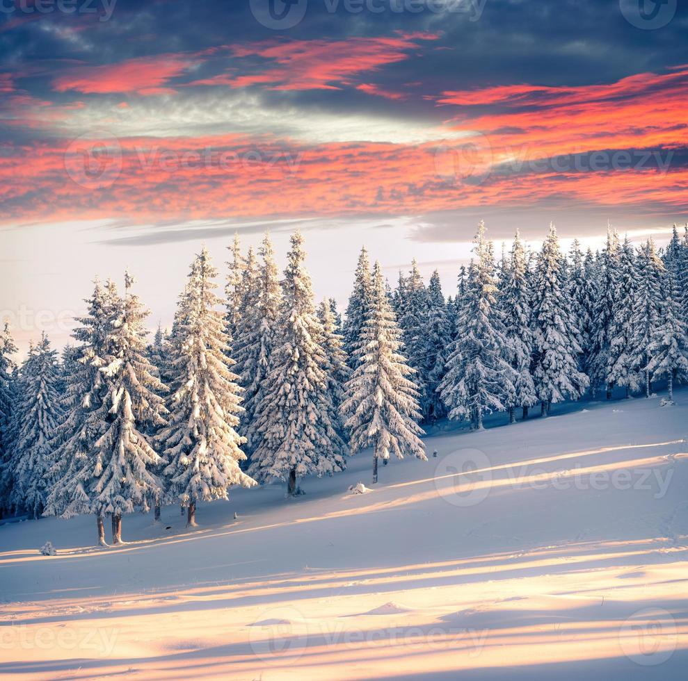 Colorful winter sunrise in the mountains. photo