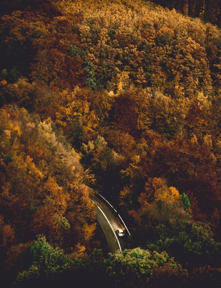 Fotografía aérea de árboles otoñales durante el día. foto