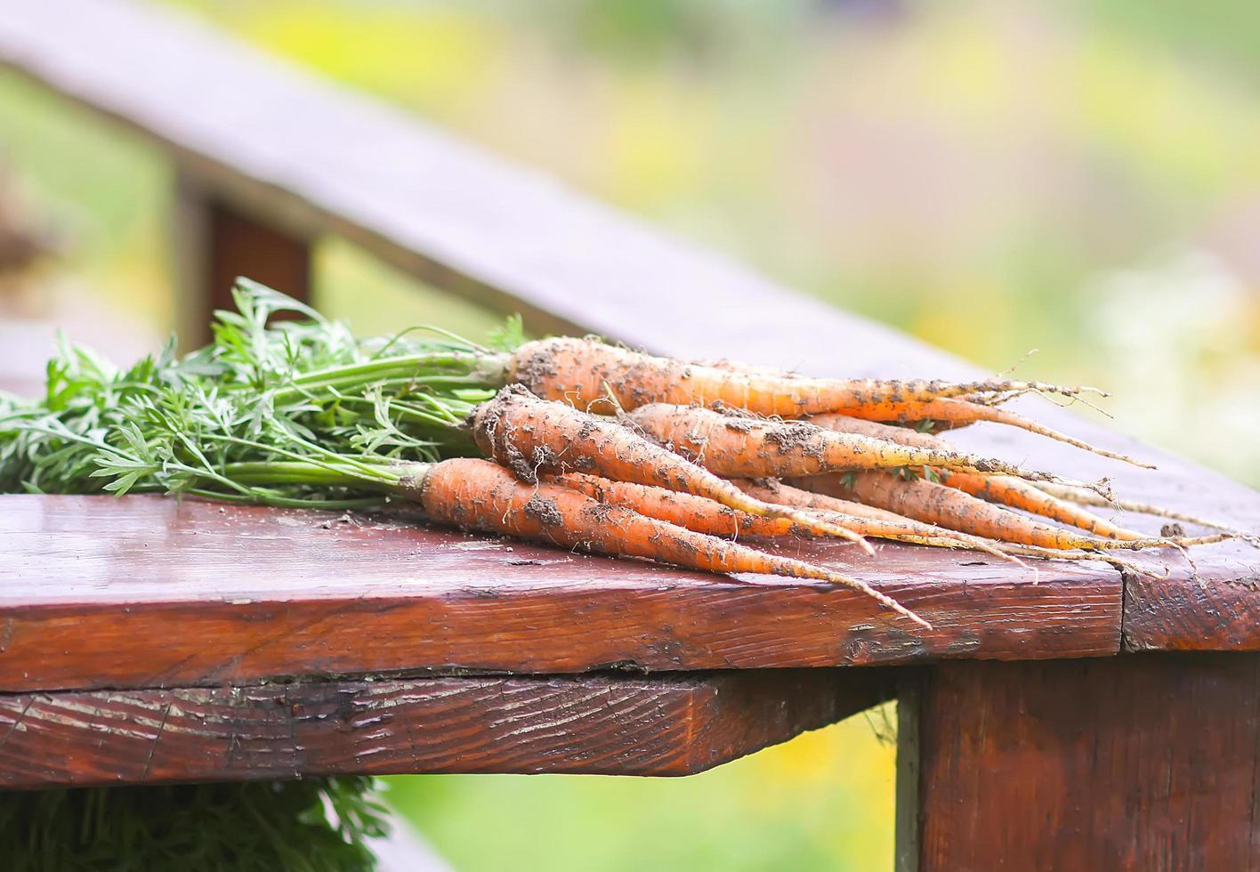 zanahorias recogidas del jardín foto