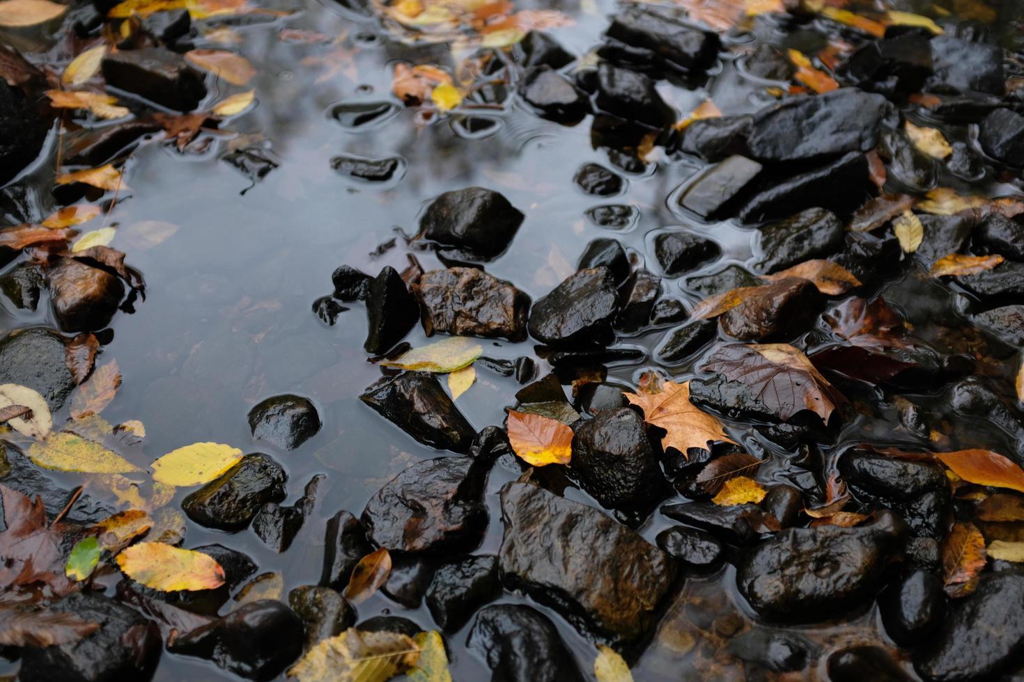 hojas caídas en un arroyo foto