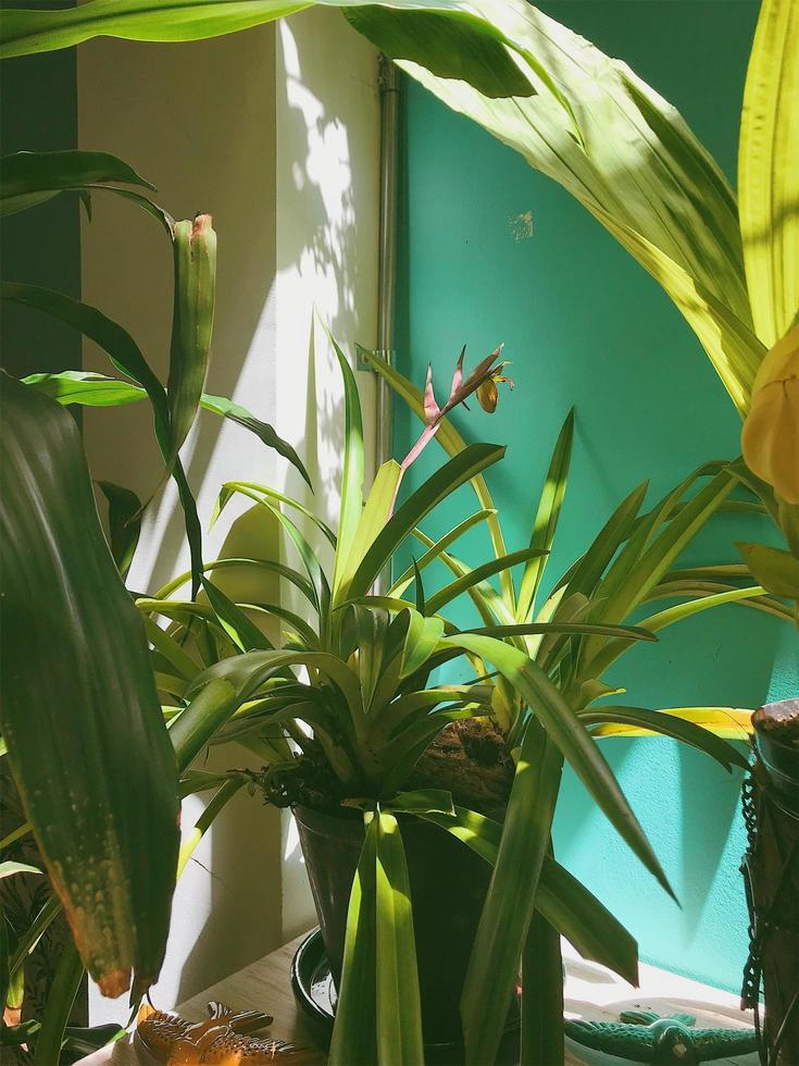 planta en pared verde foto