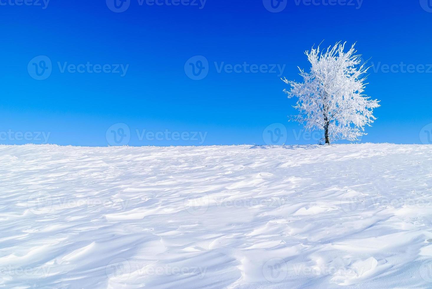 árbol nevado foto