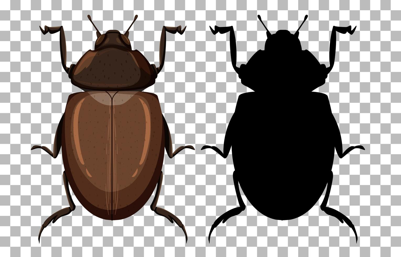 Top view of beetle and silhouette vector