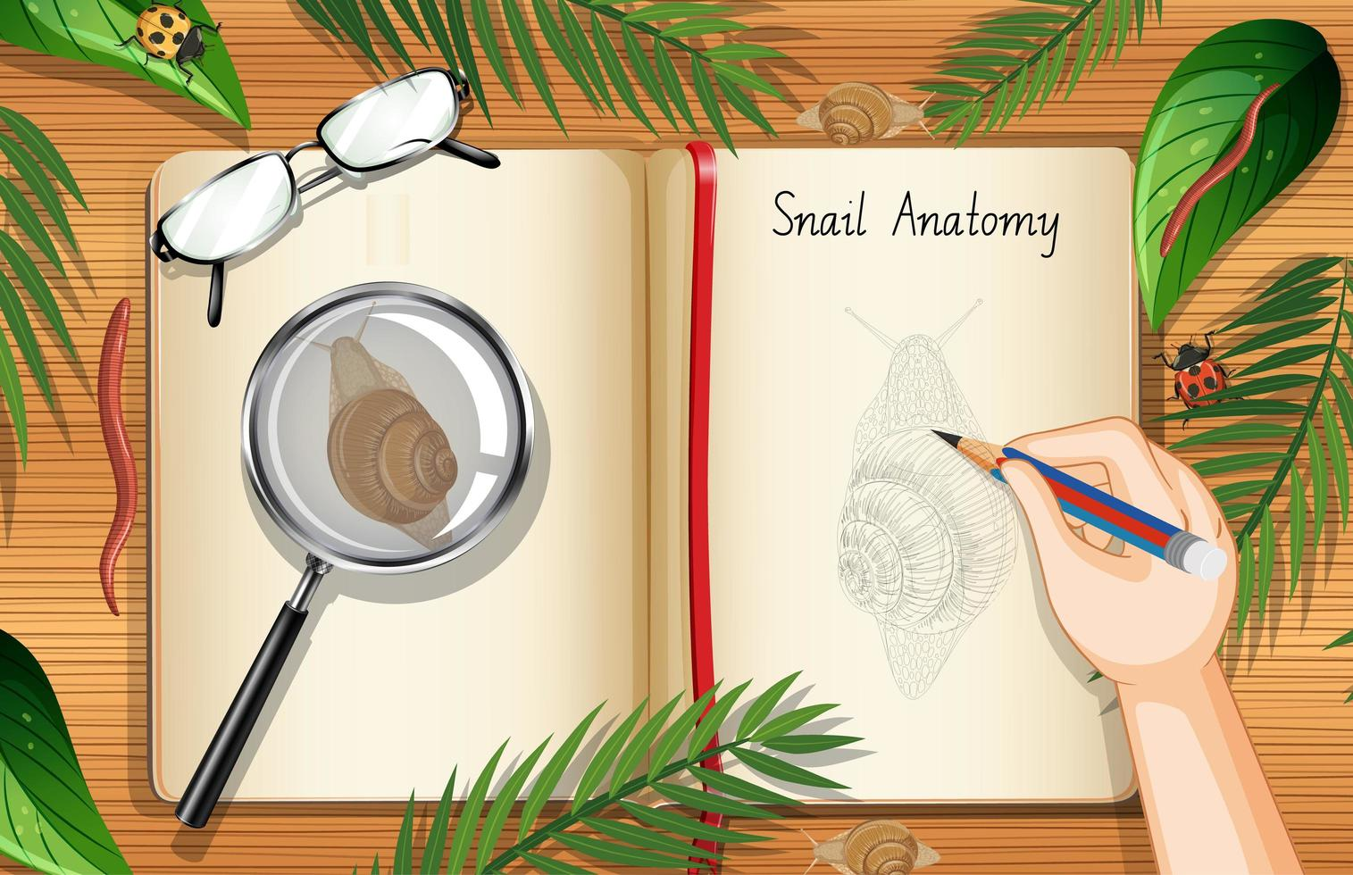 Blank book page with snail and leaves vector