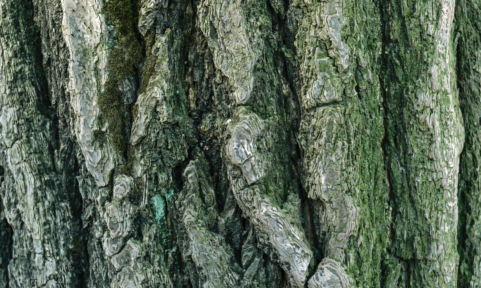 Green moss on tree bark photo